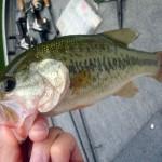 【釣行記】合角ダムにてボートでバス釣り