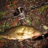 【釣行】HI-FIN クリーパーで捕獲