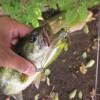 【釣行】2013年お盆休みの榛名湖バス釣り