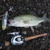 【釣行】西湖おかっぱりバス釣り 午前の部 釣果