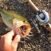 【釣行】西湖おかっぱりバス釣り 釣果 午後の部