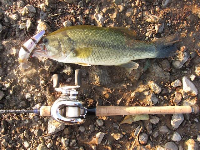 西湖 バス釣り 釣果