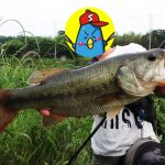 新利根川 バス釣り