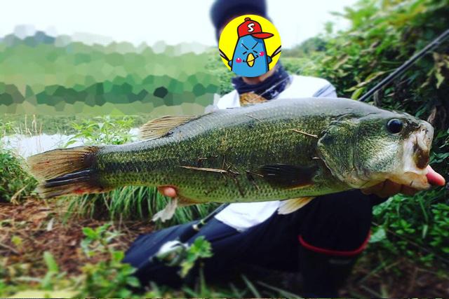 霞ヶ浦 50アップ