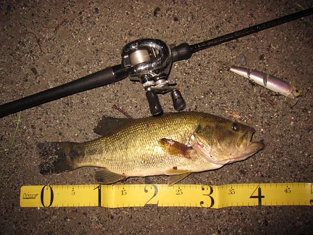 カワシマイキー 釣り方