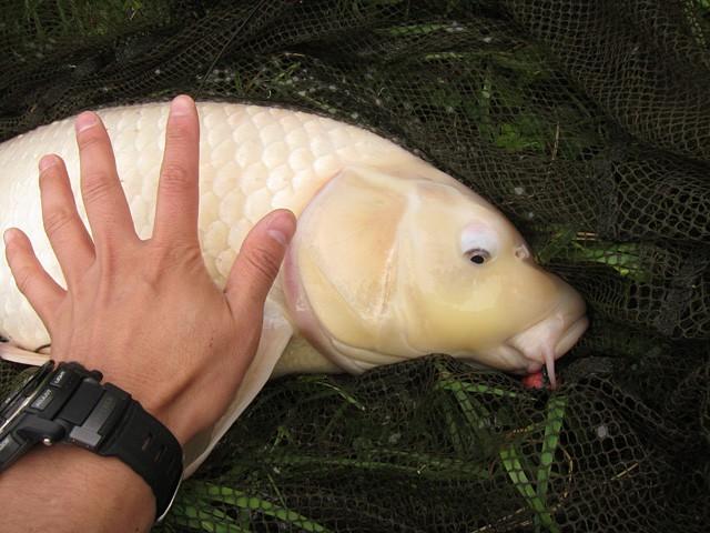 榛名湖 鯉 釣り