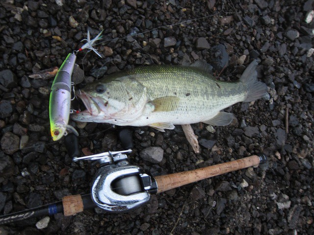 西湖バス釣り釣果