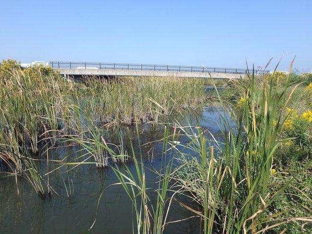 霞ヶ浦 西の洲水路